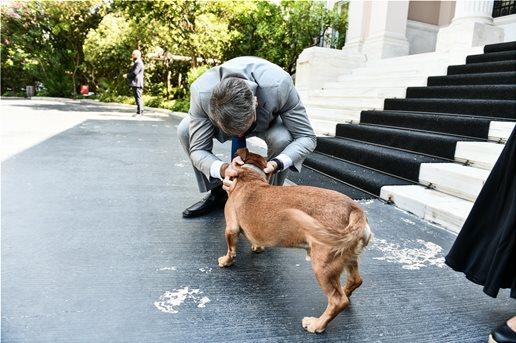 Ο Πίνατ περιμένει τον Κυριάκο στα σκαλιά του Μαξίμου καθε φορά που ο πρωθυπουργός επιστρέφει απο διακοπές